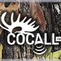 Cocall Predator Hunting Sounds Card