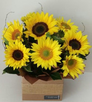 Sunny Sunflowers (free delivery)