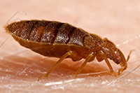 Bed Bug Protection