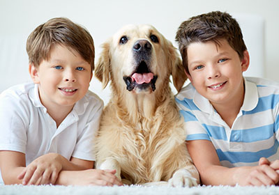 Mattress Protection from pets