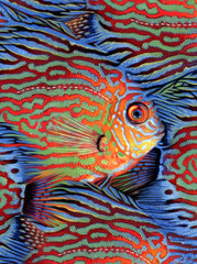 Cichlid [Note Card Set of 6]