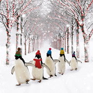 Penguins with Bobble Hats. £3.95 for 10 cards. 126 x 126mm with gloss finish. Greeting: Seasons Greetings.