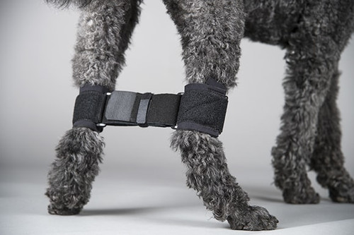 Canine Rear Leg Hobble System