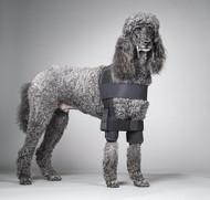 Canine Shoulder Stabilization System