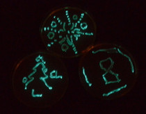 Grow Bioluminescent E. coli Kit