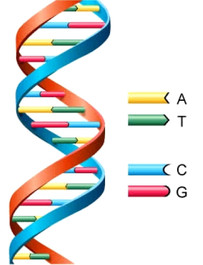Bacterial 16s rDNA primers for Bacterial identification