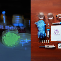 Bacterial CRISPR and Fluorescent Yeast Combo kit