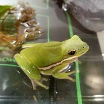 Frog Genetic Engineering Kit - Learn to Genetically Modify Animals