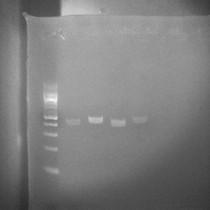Genetics 101 - Remote Live Class
