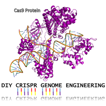 Genetic Design Starter Kit - CRISPR