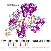 Genetic Design Starter Kit - CRISPR
