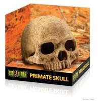 Exoterra Human Skull