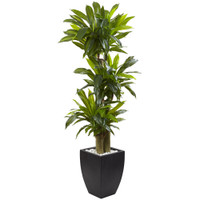 Nearly Natural 5.5 Corn Stalk Dracaena with Black Wash Planter, Green