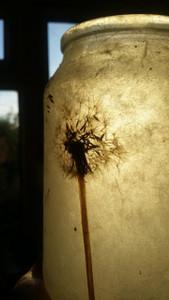 Dandelion Lantern