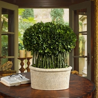 Tuscan Style Topiaries