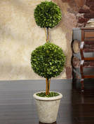 Boxwood Topiary Tree