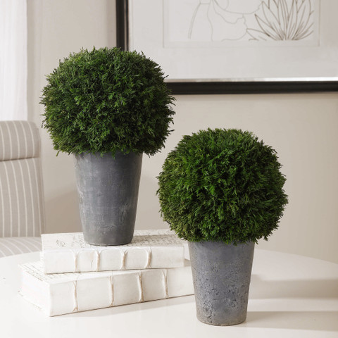 Preserved Cypress Ball Topiaries