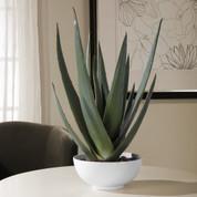 Silk Aloe Planter