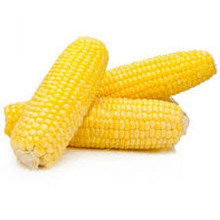 Corn (2 counts)