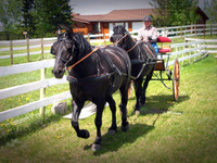 Tandem Harness Leather for Full Size Horse