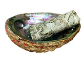 Abalone Shell & White Sage Smudge Stick