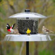Droll Yankees Jagunda Squirrel Proof Bird Feeder With Pole DY JAG