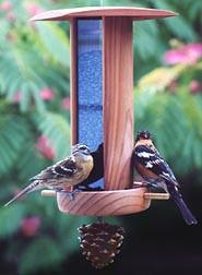 Schrodt Songbird Lantern Feeder SBL