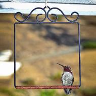 POP'S Original Hummingbird Swing in Black POPSWINGBL