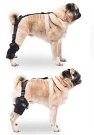 Caldera International Small Universal Pet Therapy Wrap - Tarsal/Stifle with Therapy Gel PET106
