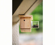 Bees N Things Hanging Carpenter Bee Trap BEESST