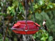 Nature's Way Red Crackle Top-Fill Hummingbird Feeder NWMHF4