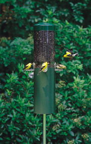 Birds Choice Classic Bird Feeder with Built-In Squirrel Baffle and Pole NP431 Green