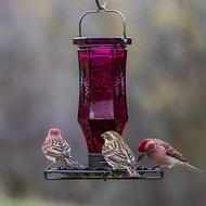 Perky Pet Amethyst Starburst Vintage Glass Wild Bird Feeder 8137-2