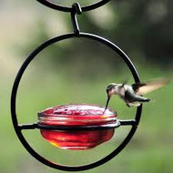 Couronne Co Sphere Hummingbird Feeder COURM045301