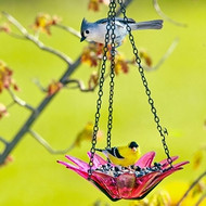 Couronne Co Fuchsia Hanging Daisy Birdbath and Bird Feeder COURM34920007
