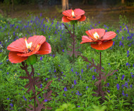 Desert Steel Poppy Garden Torch Trio 3 Pack DS409001 (