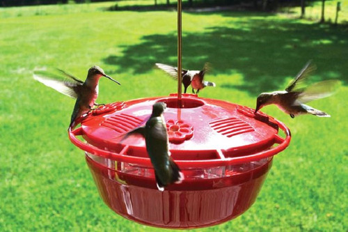 Humm-Yumm Hummingbird Feeder 2 in 1 Feeder Nectar and Protein Feeder