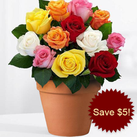 12 Mixed Roses In A Pot
