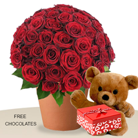 60 Red Roses In A Bunch With Teddy And Free Chocs