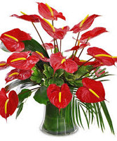 Anthurium In A Pot