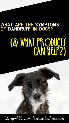 Dog Dandruff symptoms and the products that can help fight it.
