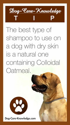 store-pin-dog-dry-skin-238.png