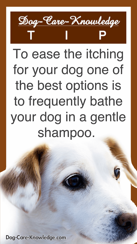 store-pin-dog-skin-conditions-allergies-c.png