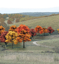 """Woodland Scenics Fall Colors Deciduous Ready Made Trees 3/4"""" to 2"""" 38-Pack"""