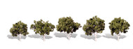 "Woodland Scenics Classic Trees Ready Made Waters Edge 1-1/4"" to 2"" Tall 5-Pack"