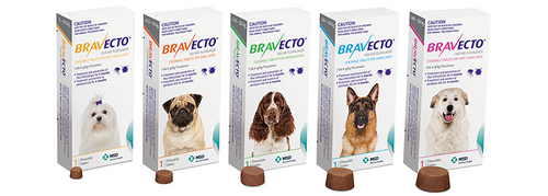 Bravecto - 3 month's flea & tick protection in a single tasty chew!