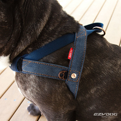 EzyDog Quick Fit Harness on small dog