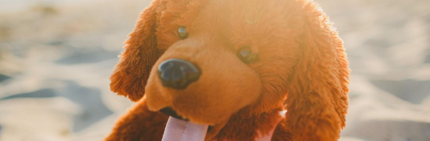 Fundraising Ideas With Animaland