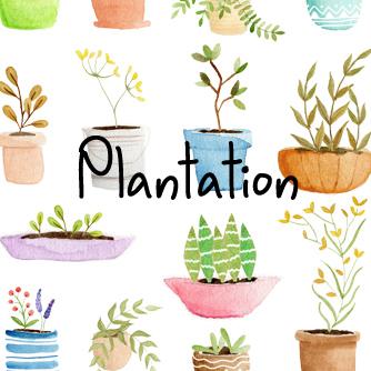 title-plantation.jpg