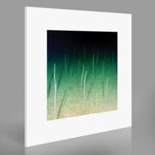 Mike Weis - Loop Current/Raft - LP Vinyl